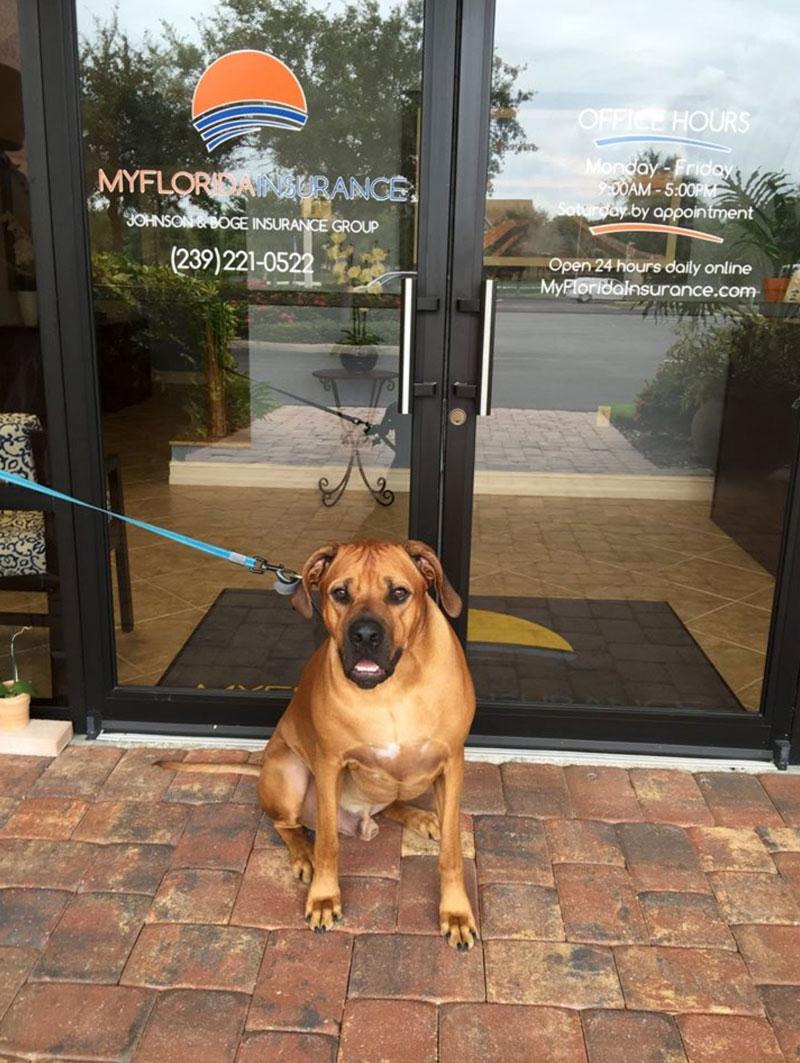 My Florida Insurance - Personal lines insurance in Bonita Springs FL